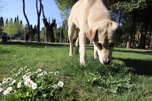 dog-dogs-daisy-dog-head-4575870.jpg