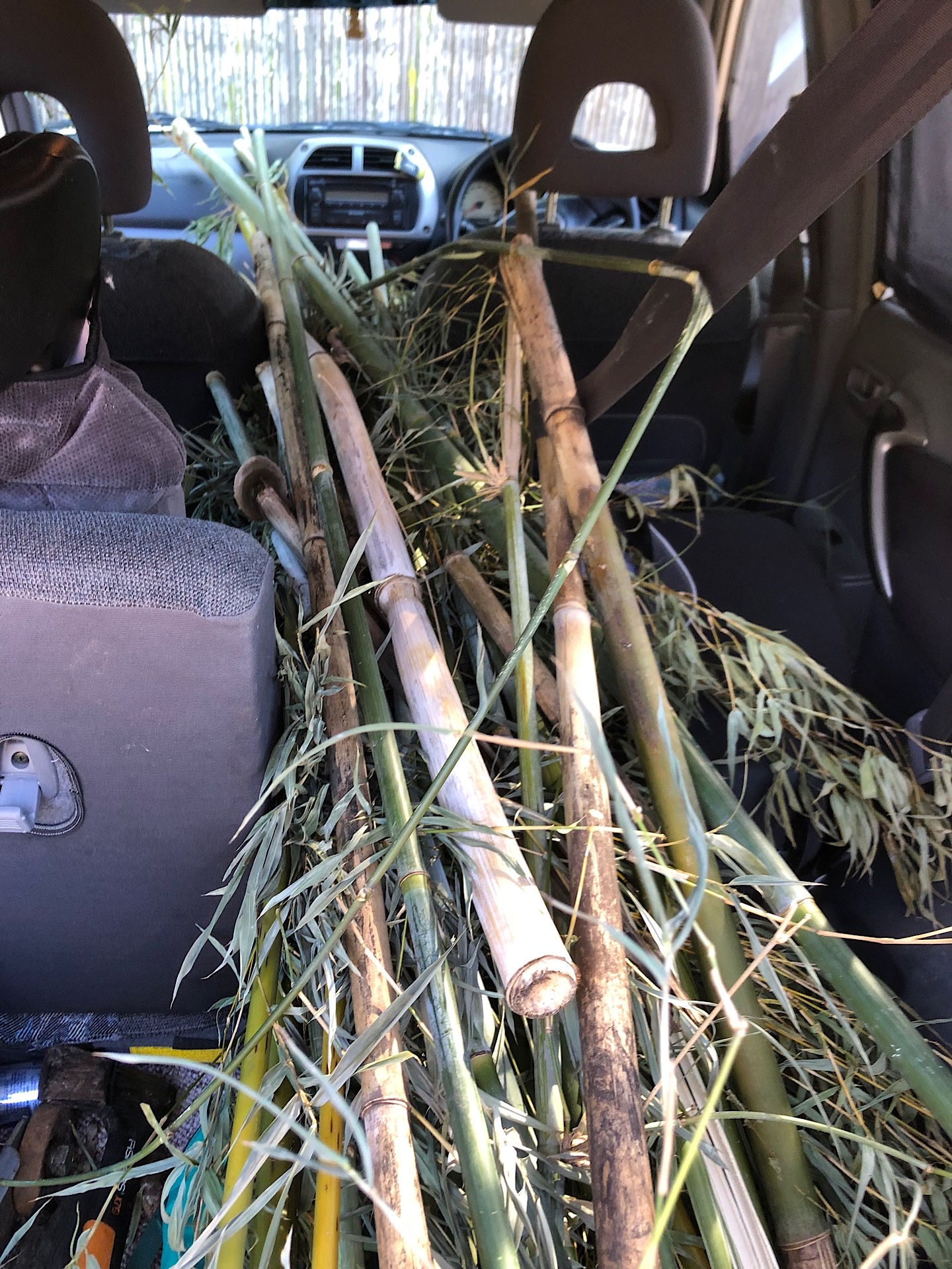 Collecting bamboo for making flutes