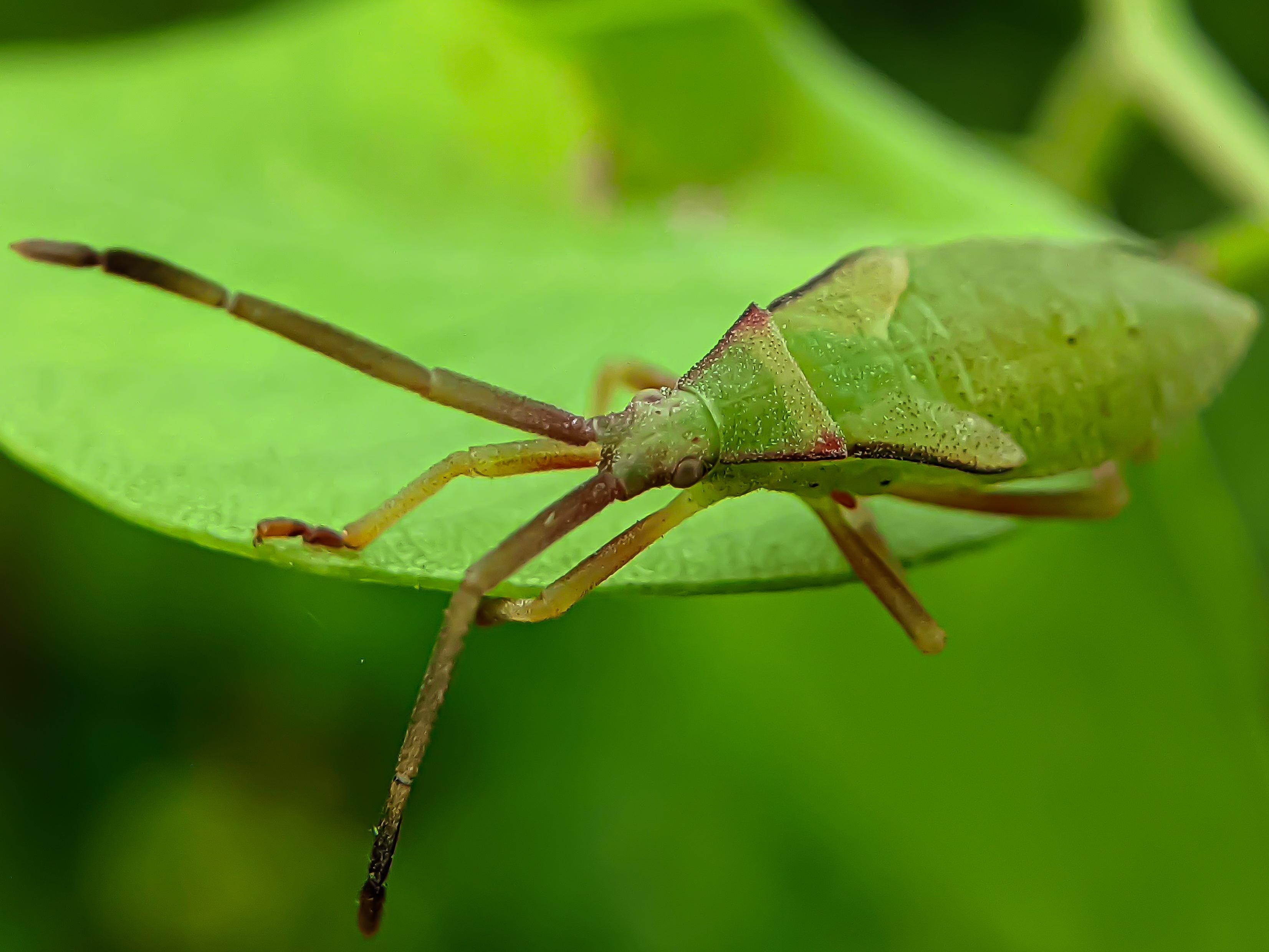 bug (6).jpg