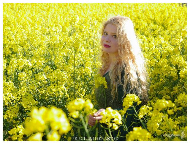 yellow flowers -640- by Priscilla Hernandez.jpg