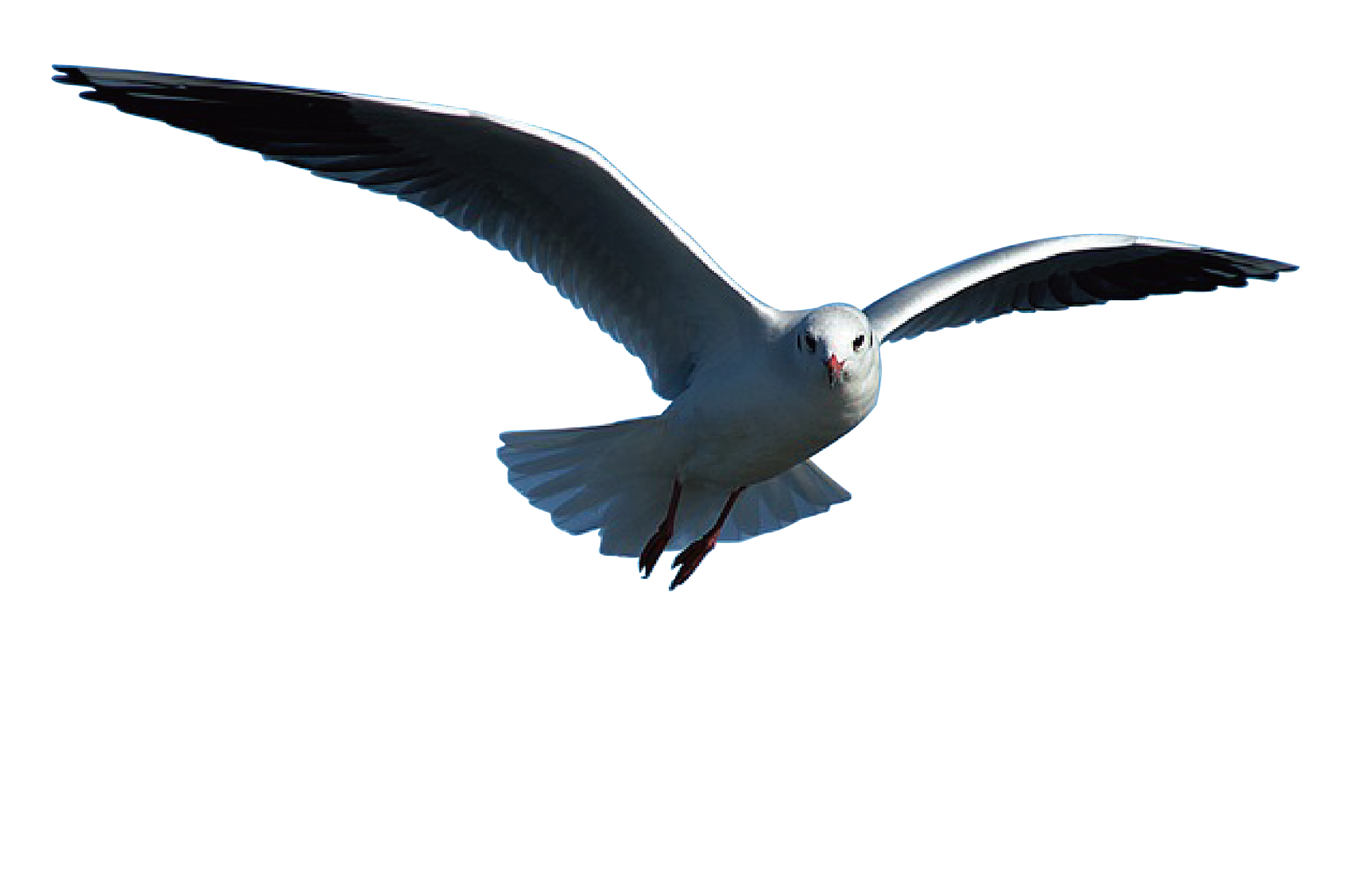 seagull-1643082_1920.png