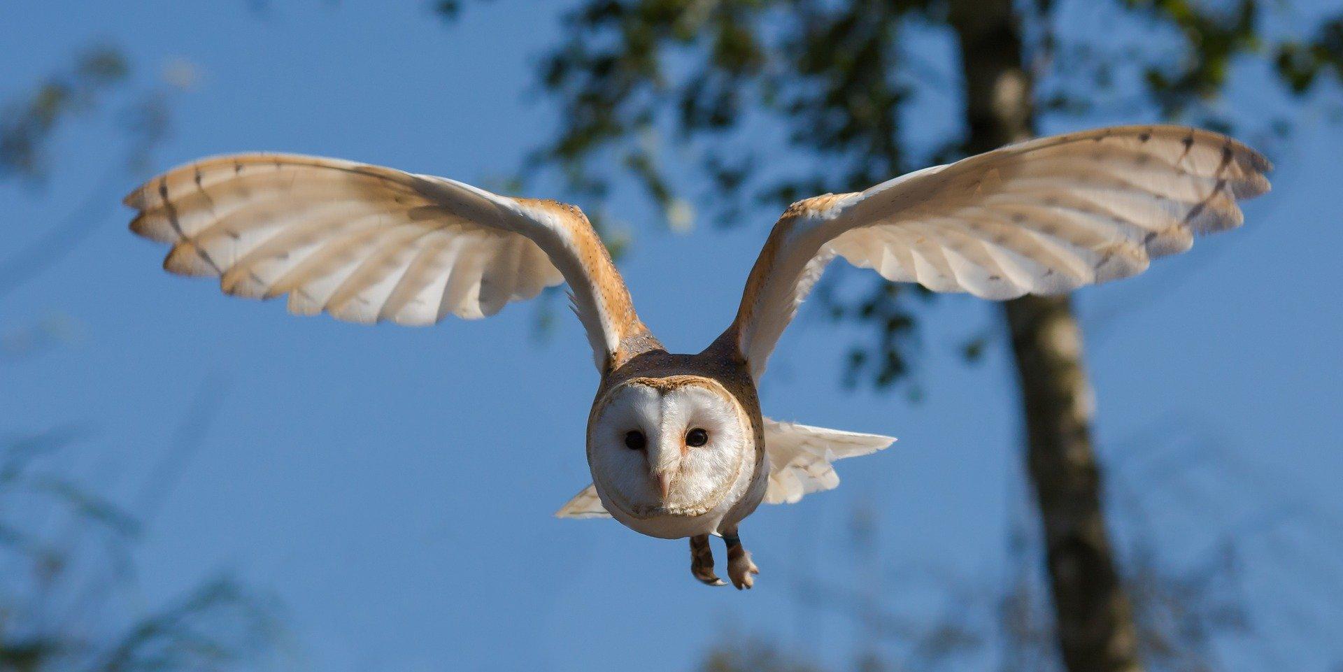 barn-owl-1107397_1920.jpg