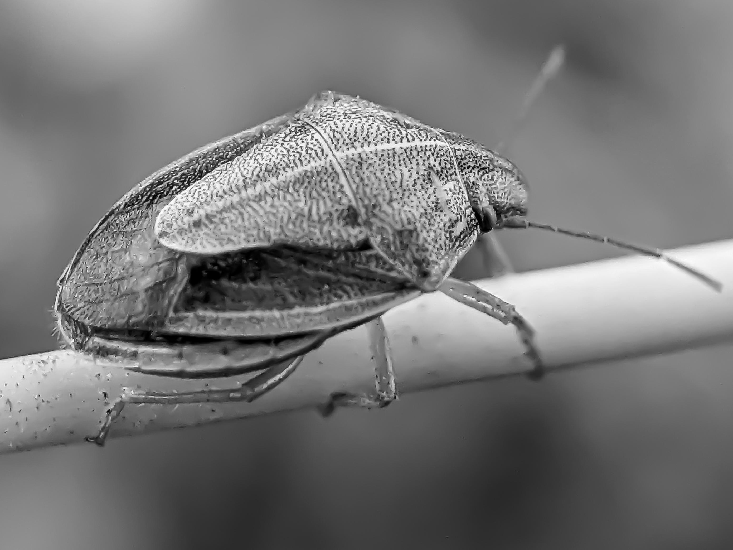 bug (1).jpg