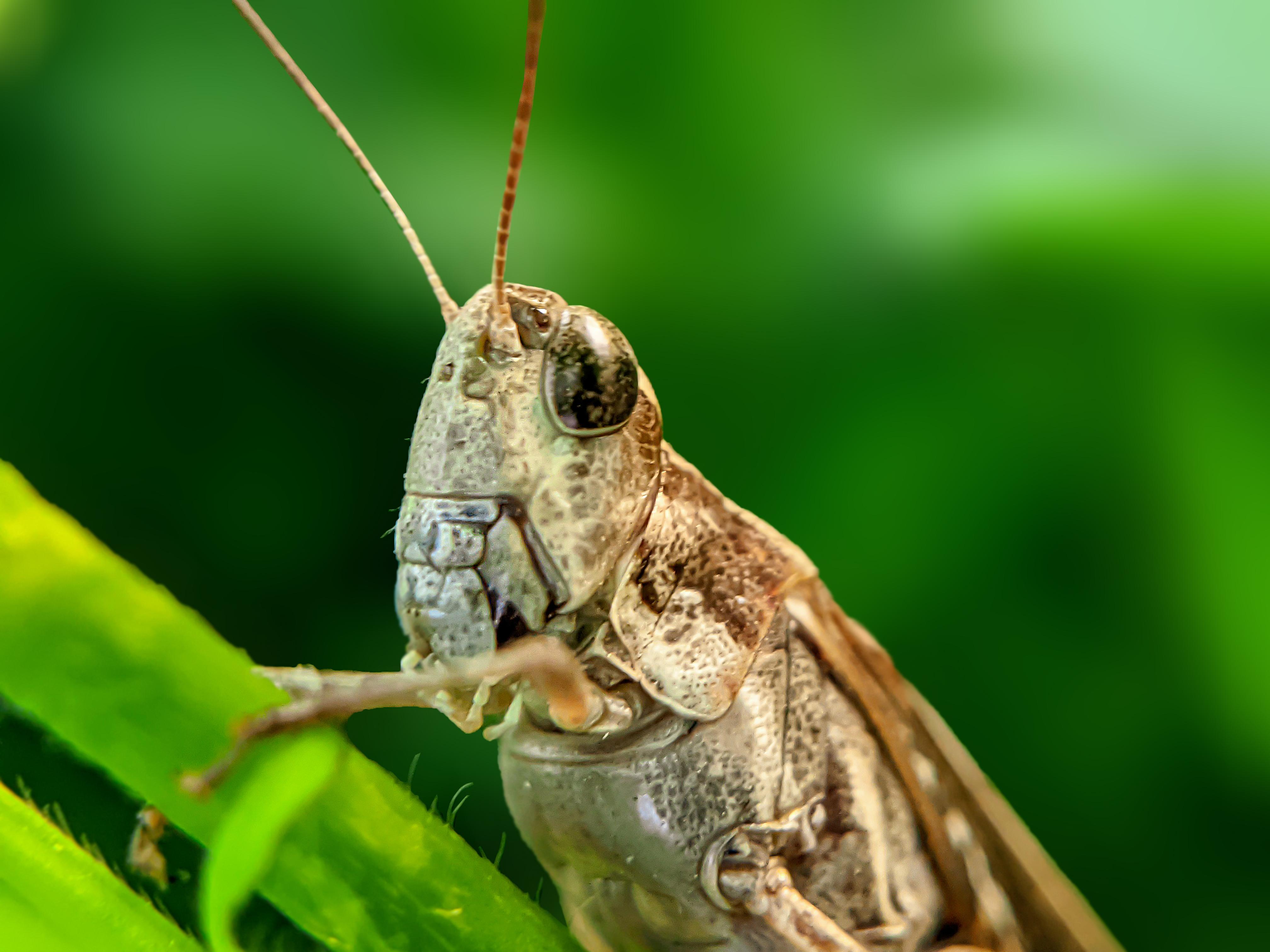 Grasshopper (5).jpg