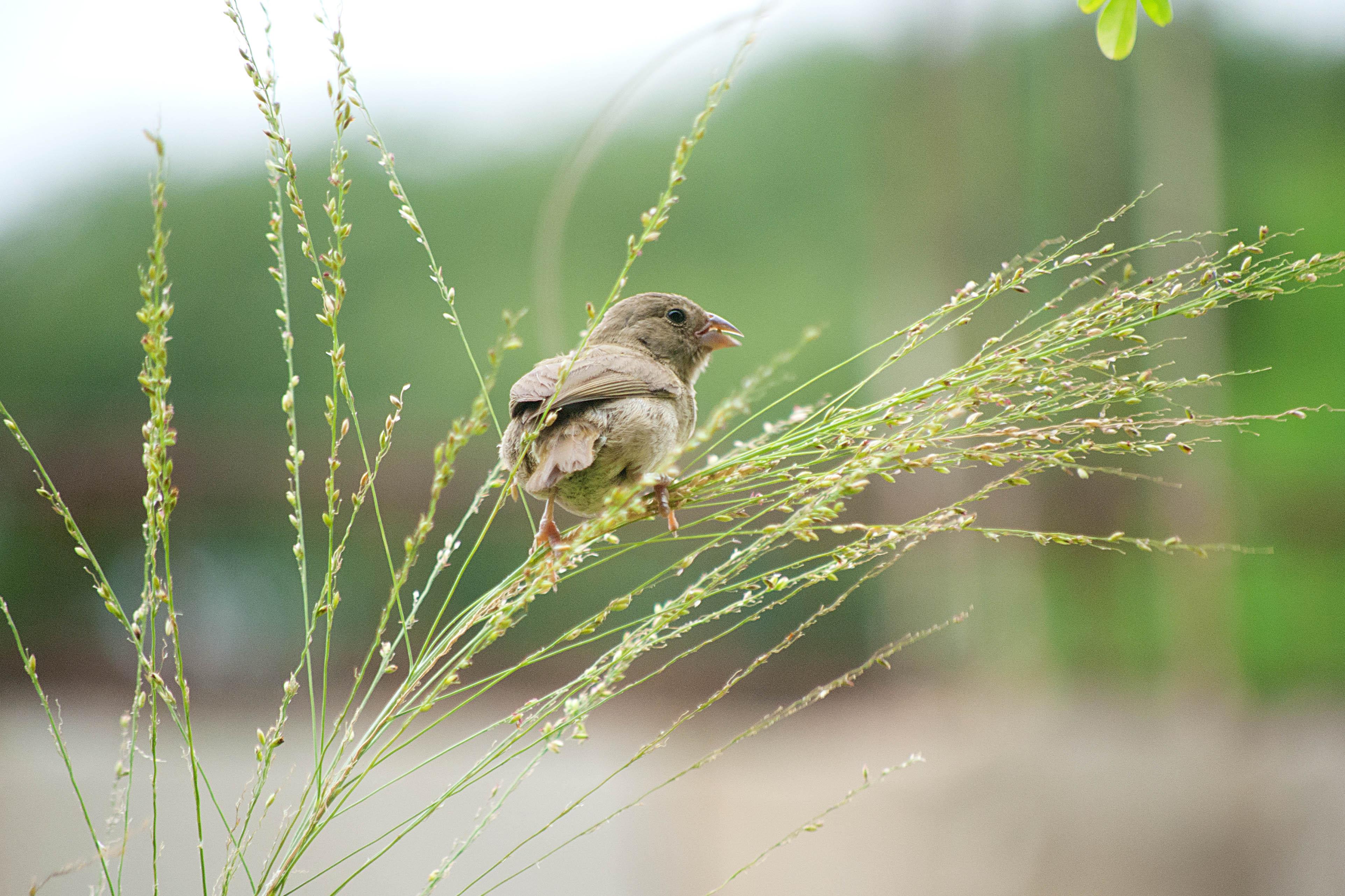 little bird.jpg