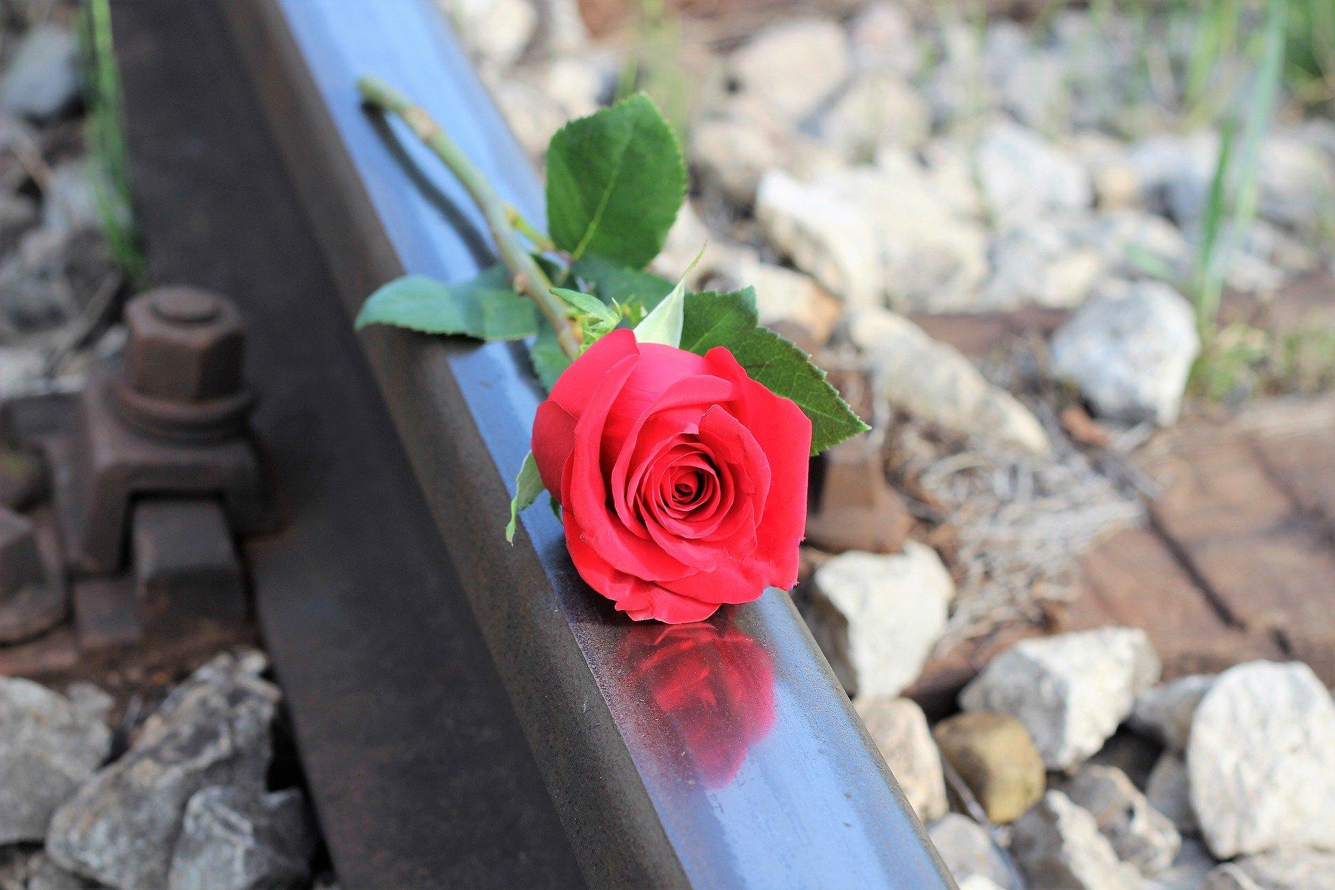 red-rose-2253110_1920.jpg