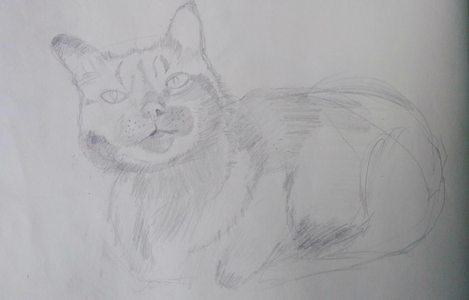 gato 3.jpg