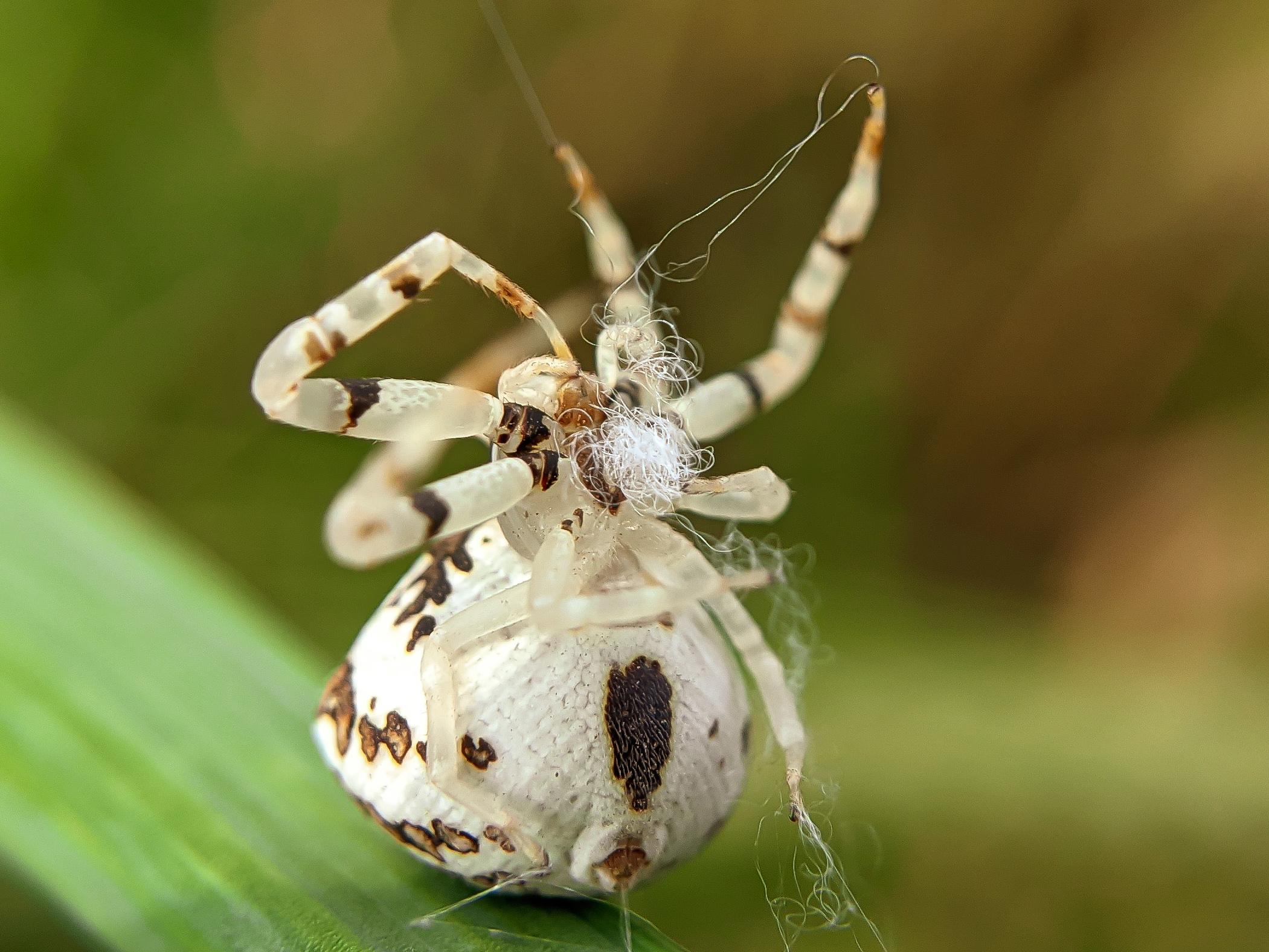 spider (19).jpg