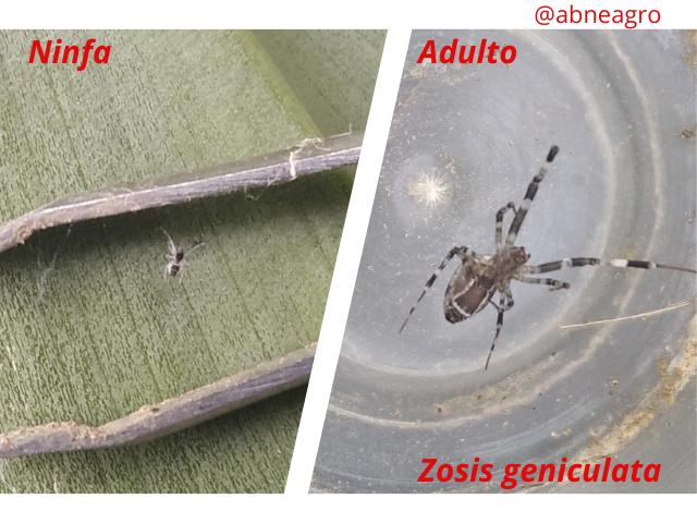 Arachnida(6).png