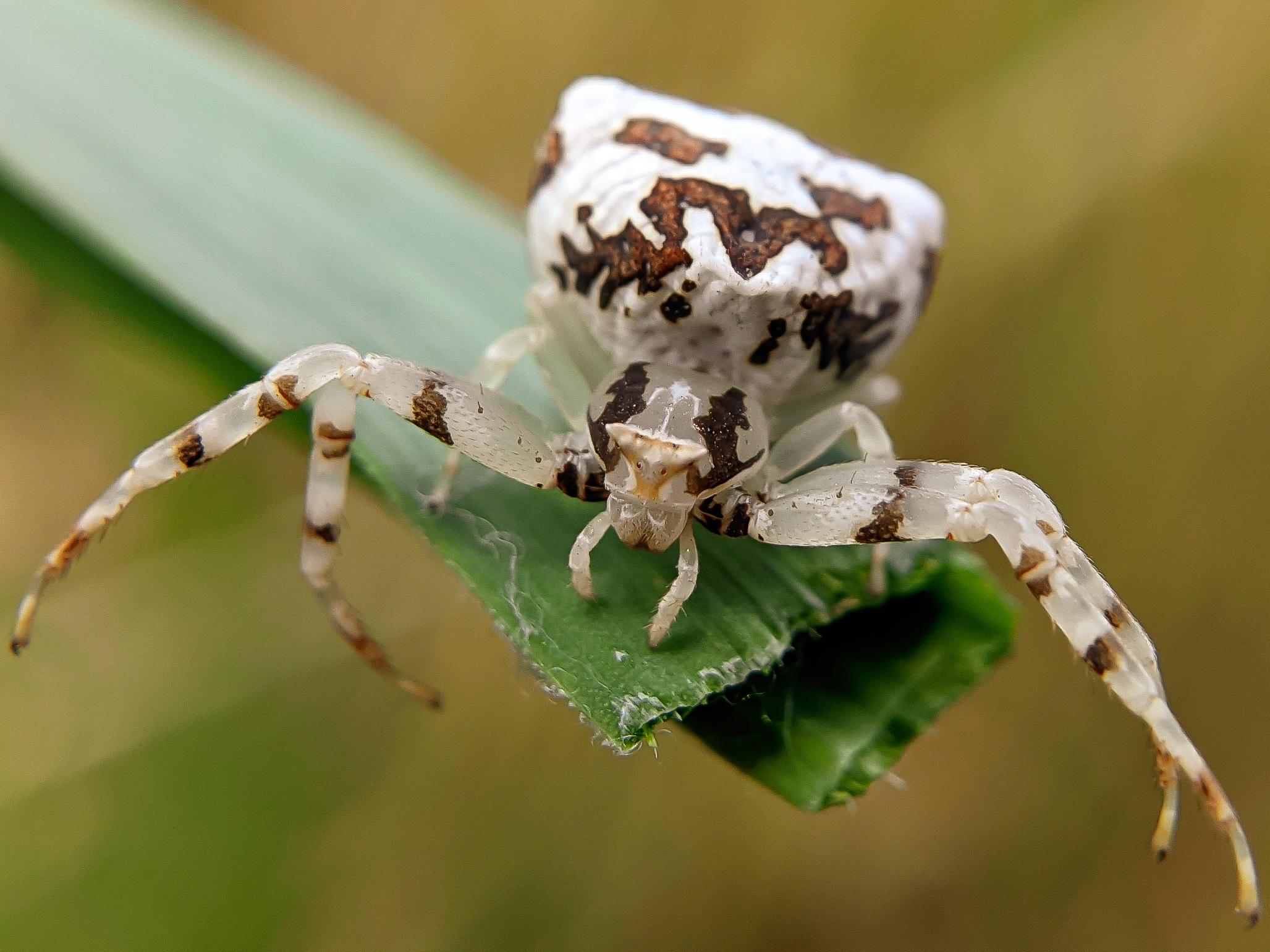 spider (21).jpg