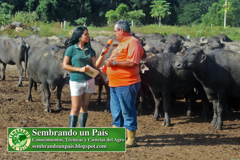 4 una experiencia con búfalos.jpg