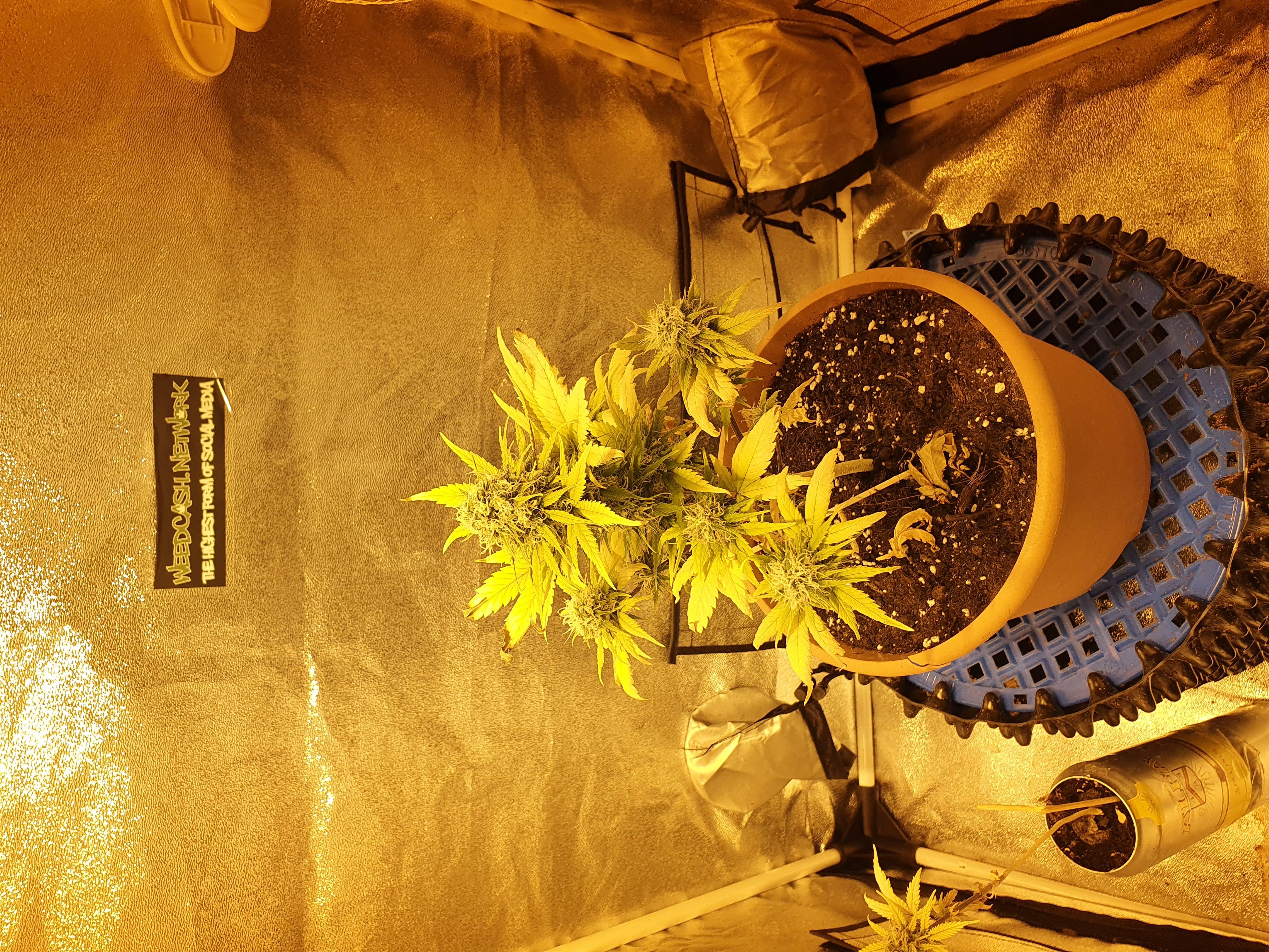 grow update