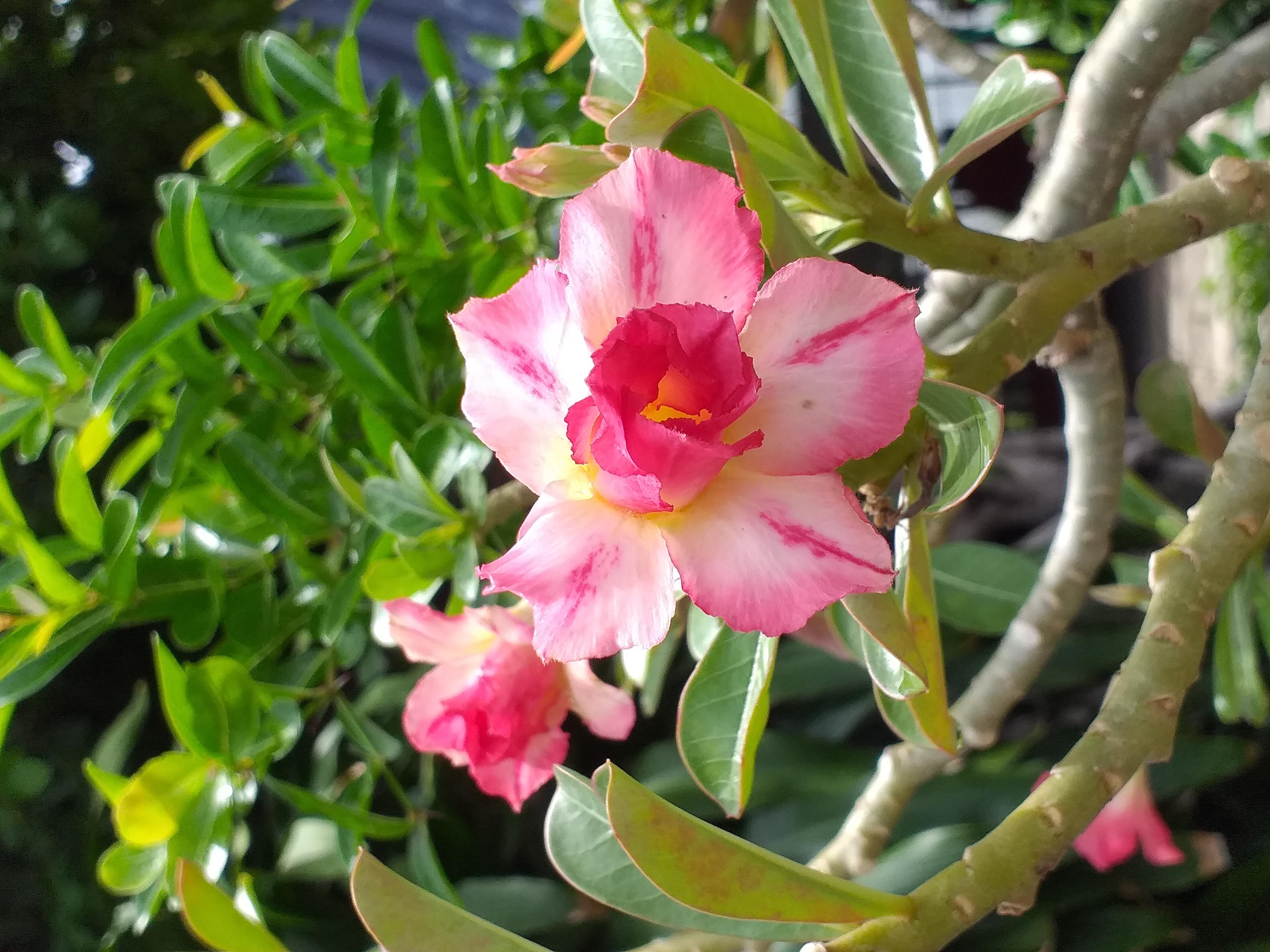 flower35.jpg