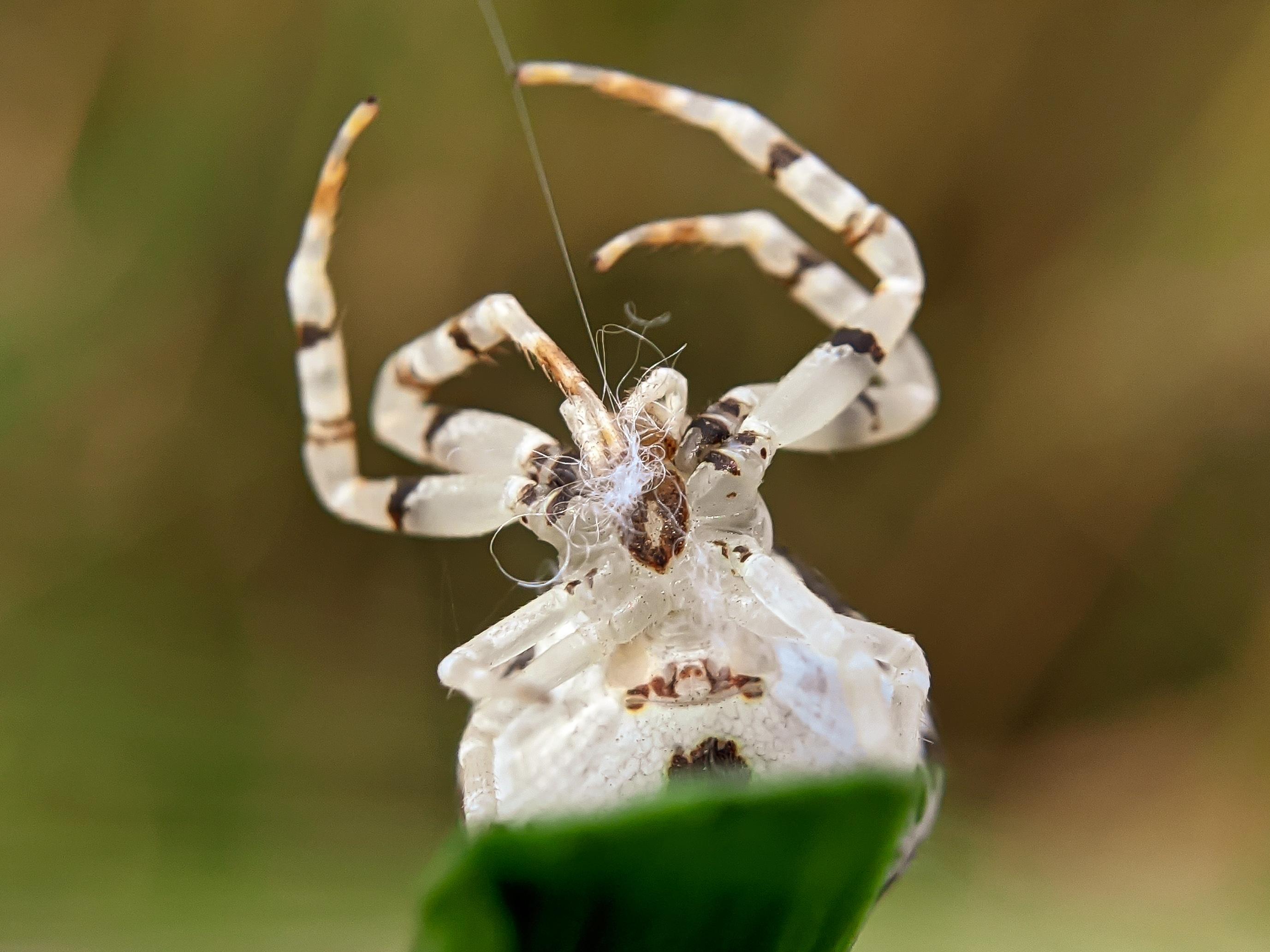 spider (17).jpg