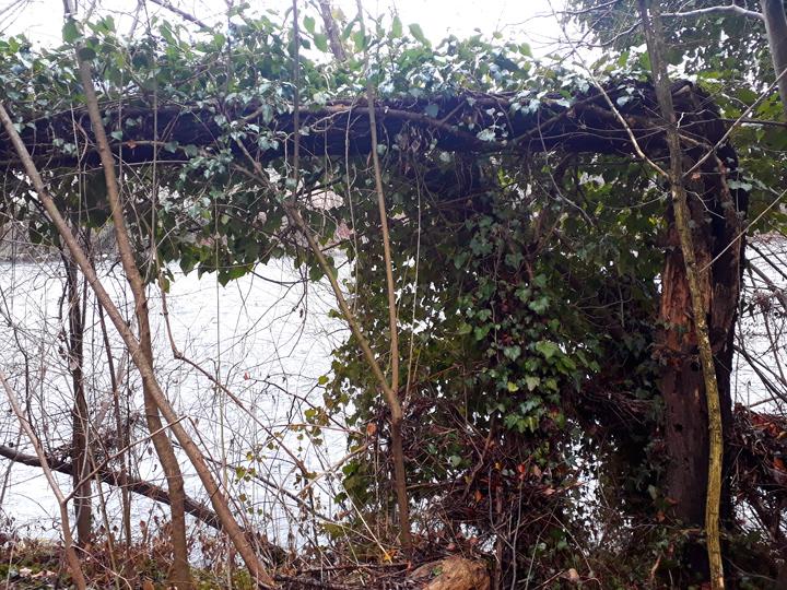 Treegate.jpg