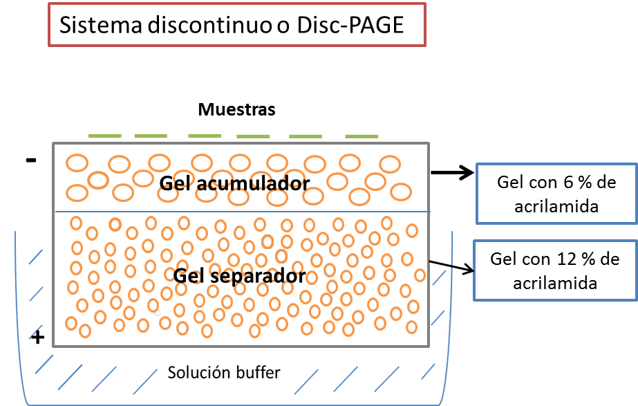 Disc-PAGE.png