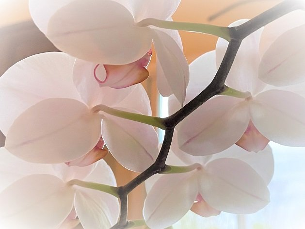 orchids.jfif