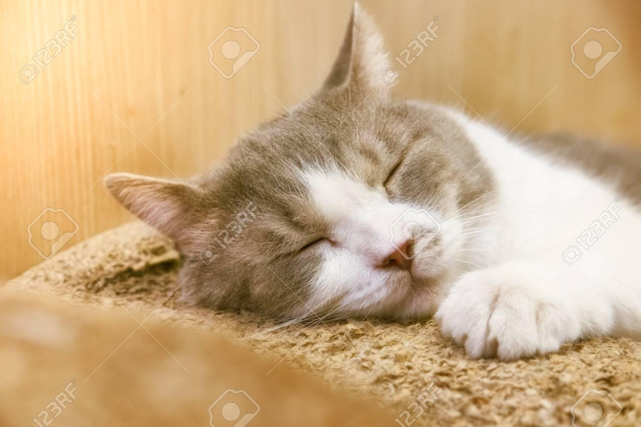 57481660-peaceful-cat-sleeping.jpg