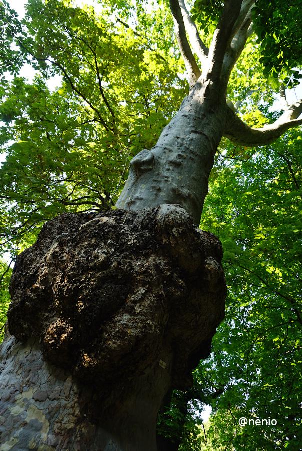 bump-tree-01.JPG