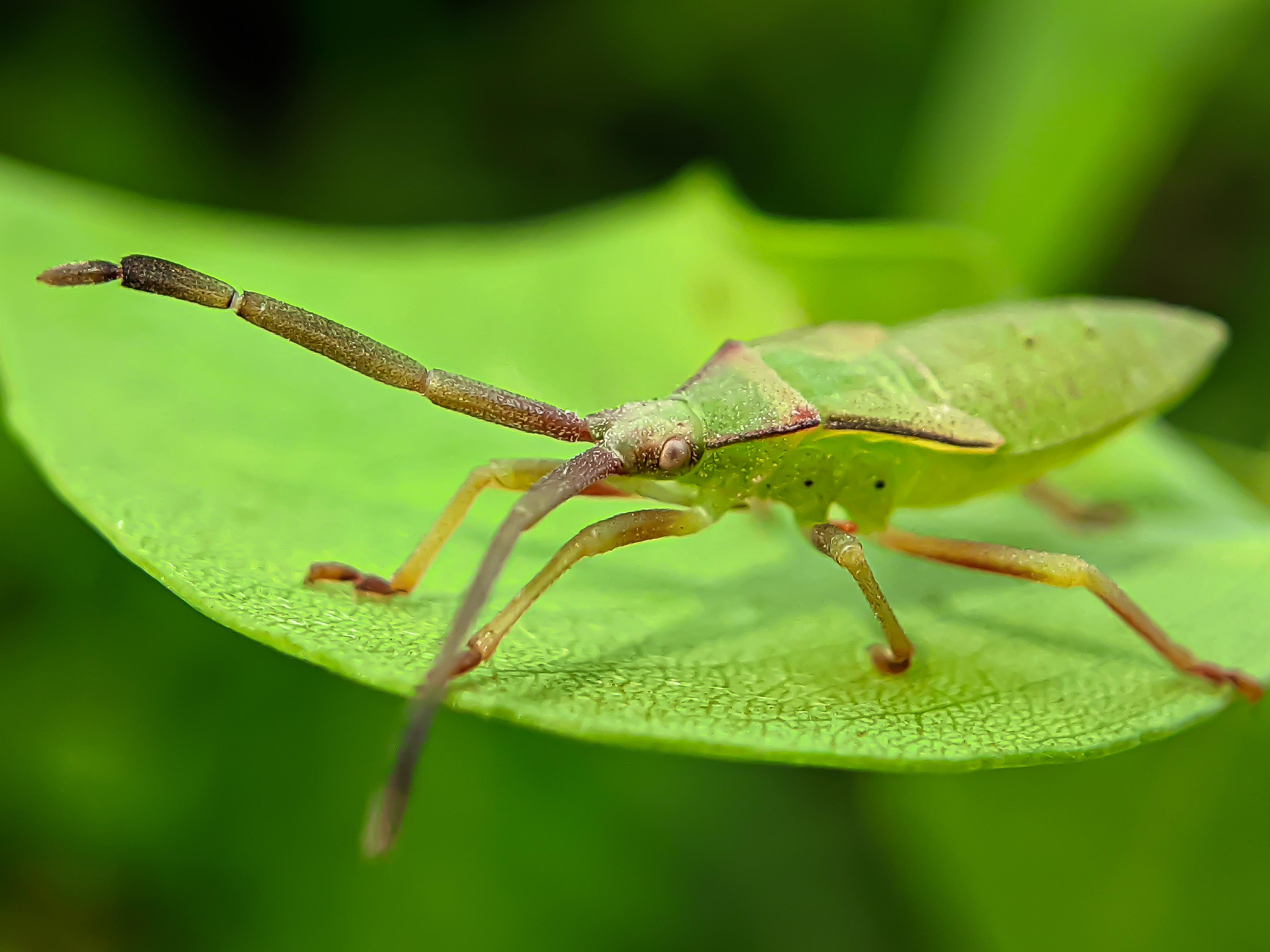 bug (4).jpg