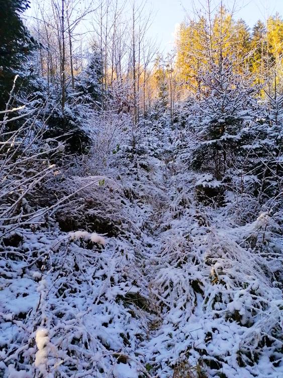 wood-snow--sun-bkgd.jpg
