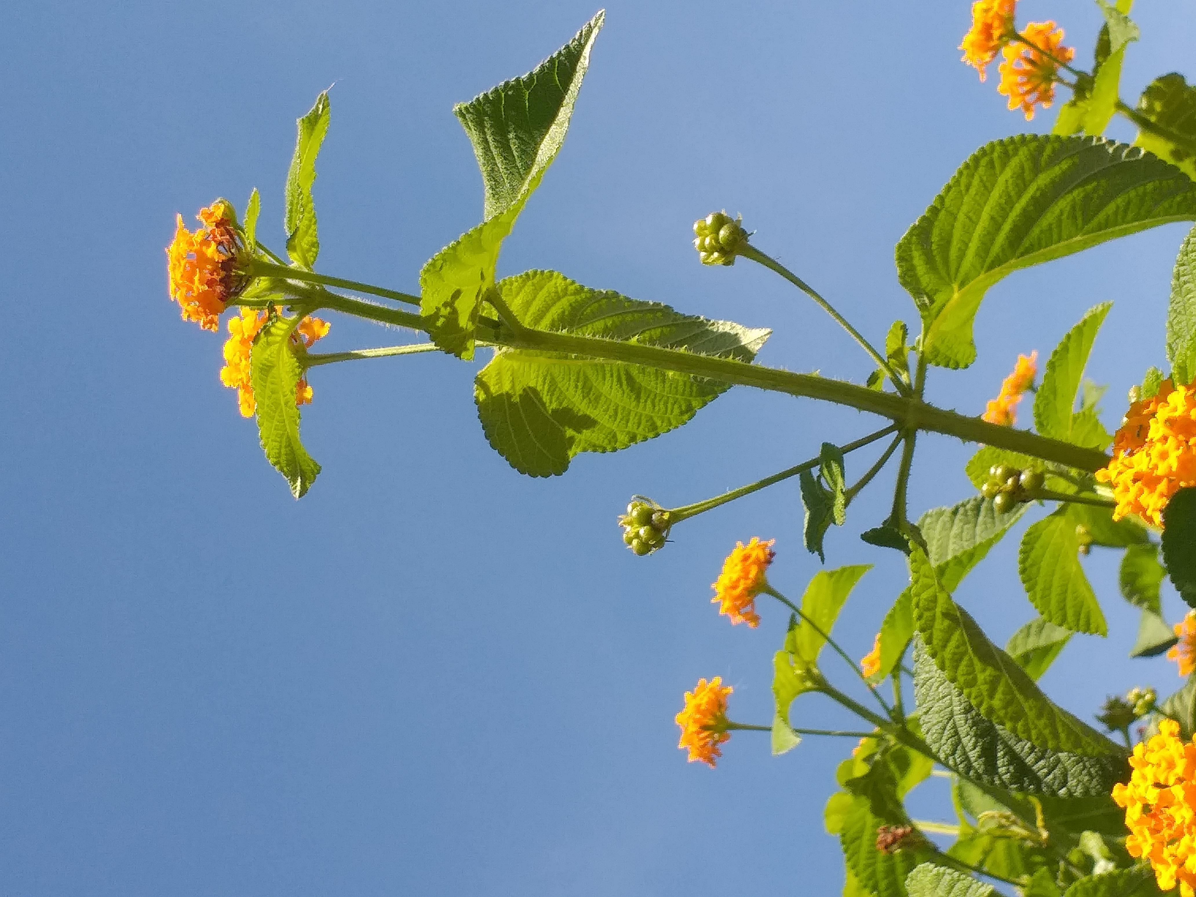 flower49.jpg
