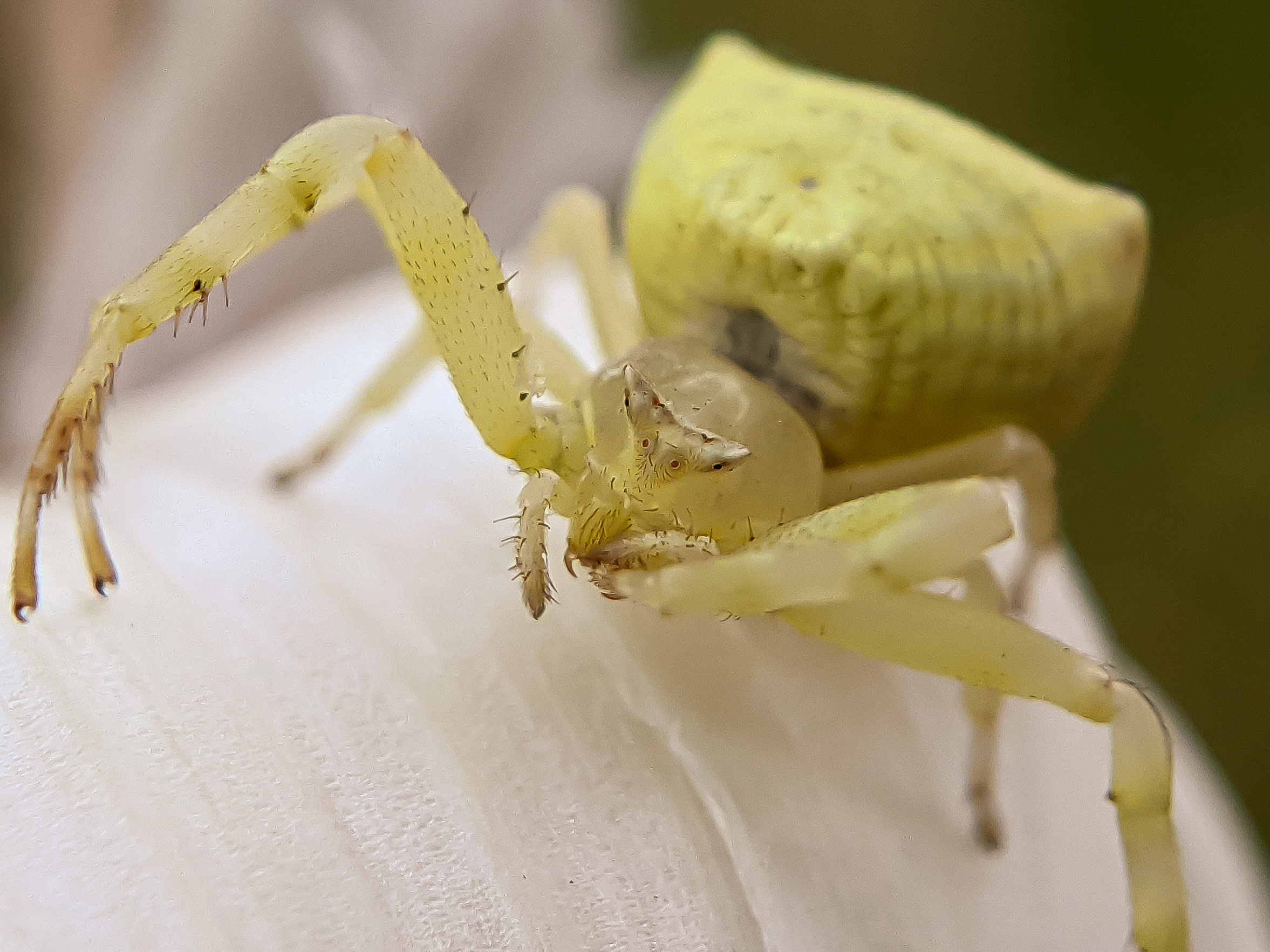 spider (6).jpg