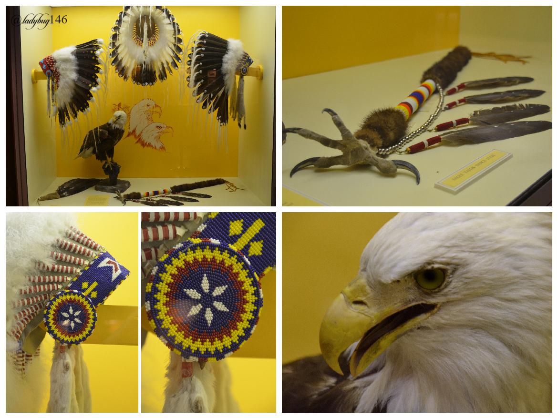 buffalo nations museum (24).jpg