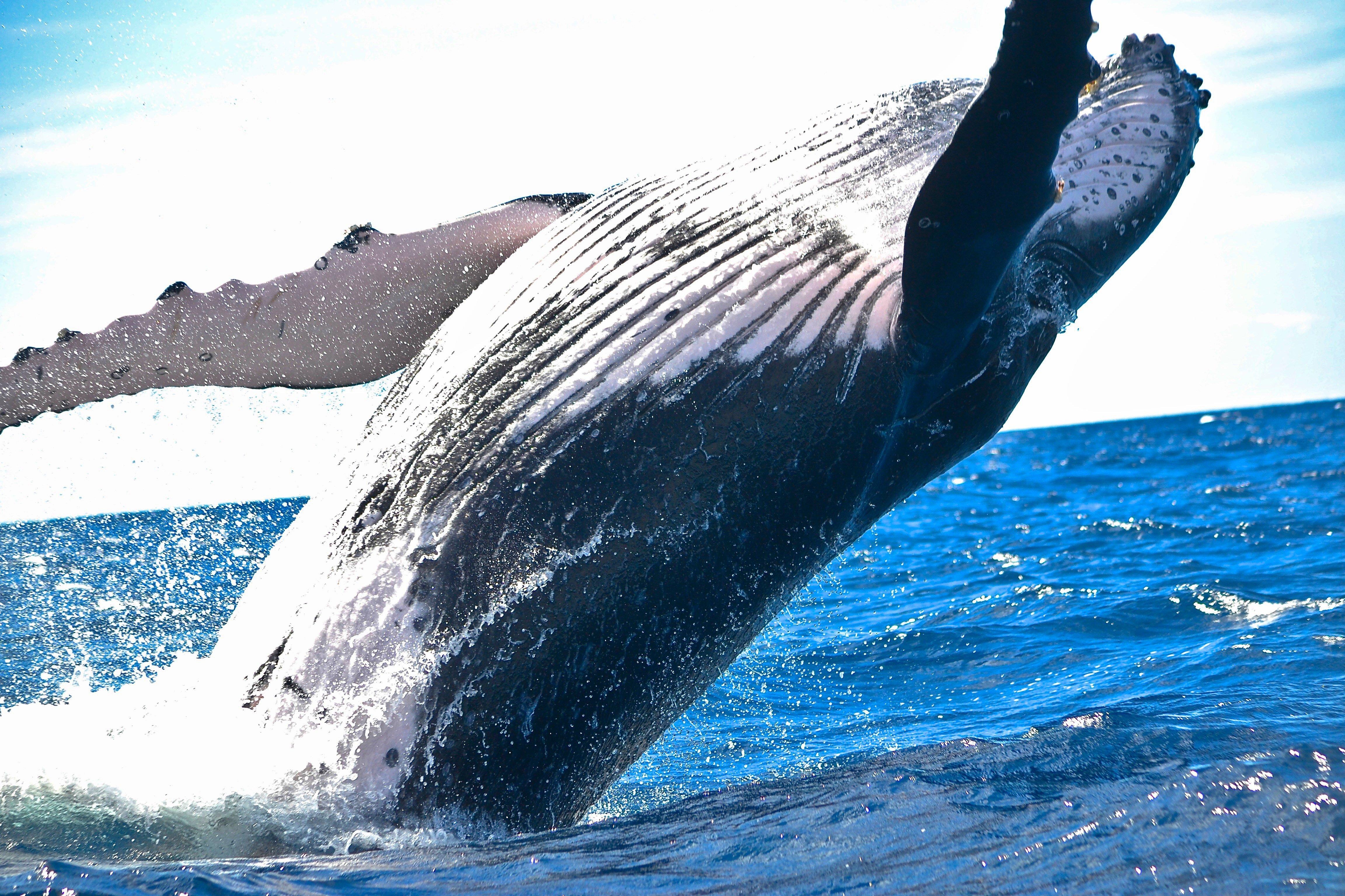 whale-1850235.jpg