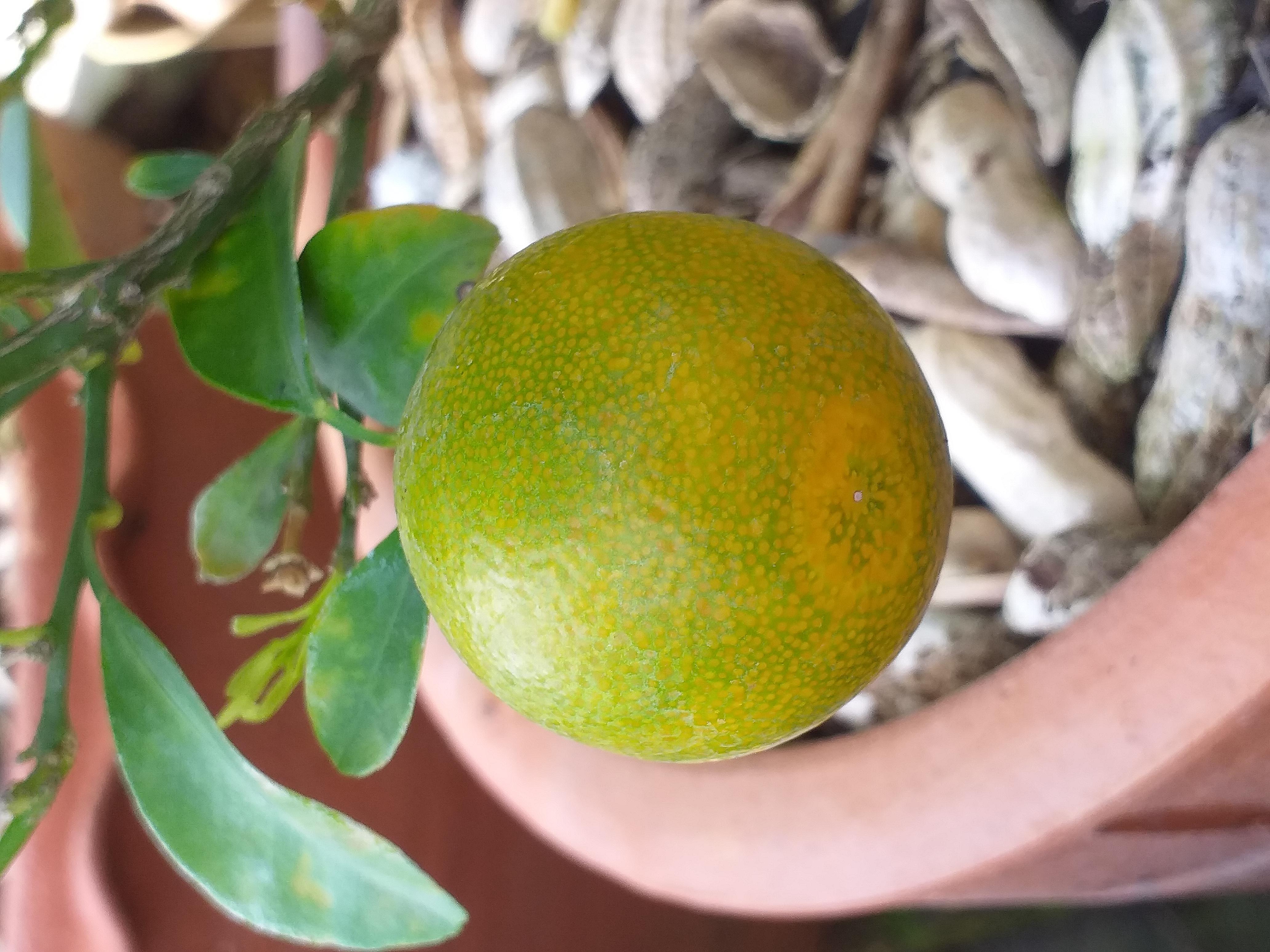 small orange5.jpg