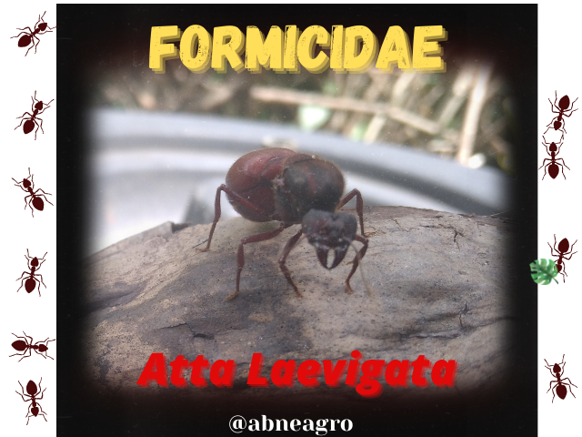 Formicidae(1).png