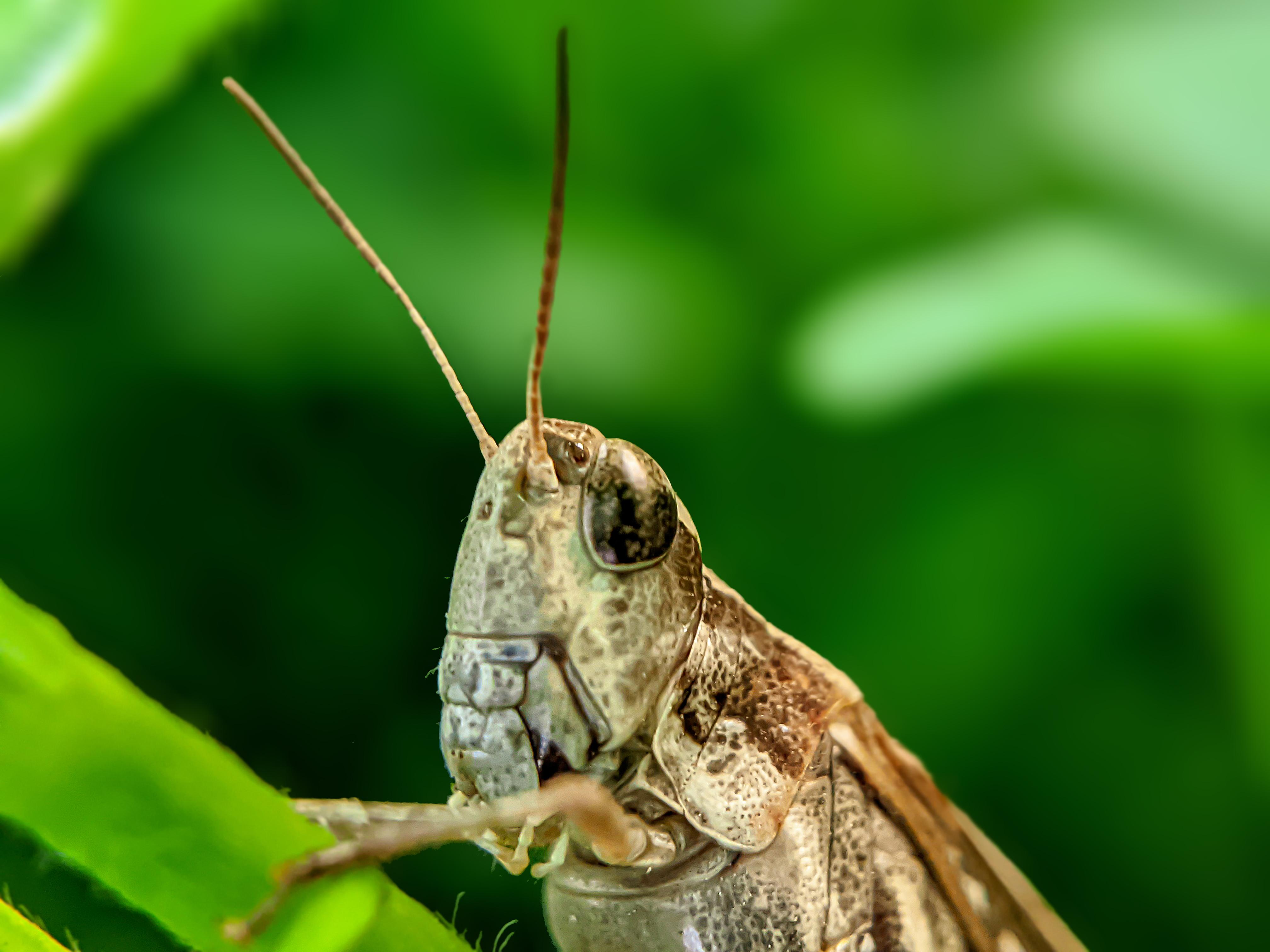 Grasshopper (4).jpg