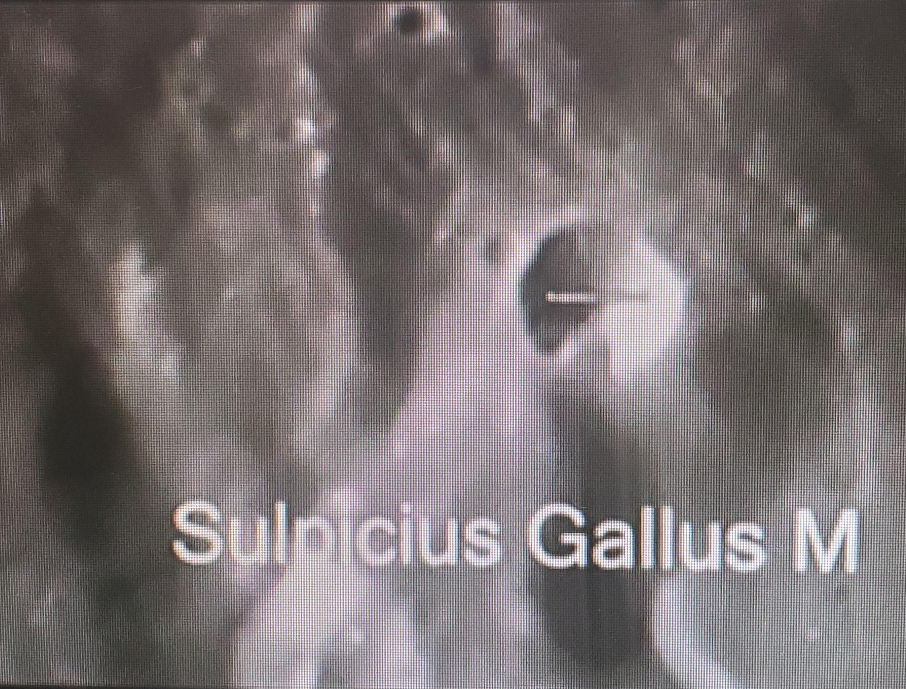 SulpiciusGallusManilius6.jpg
