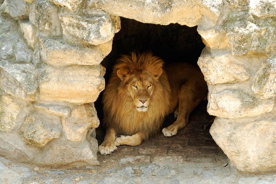lionsden.jpg