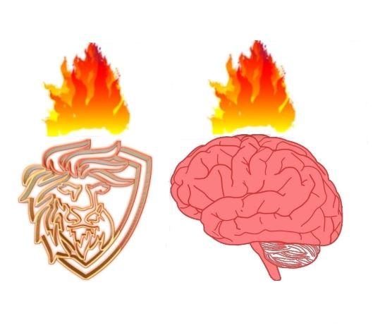brain leo b.jpg