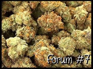 A few Questions &  GSC Forum #7