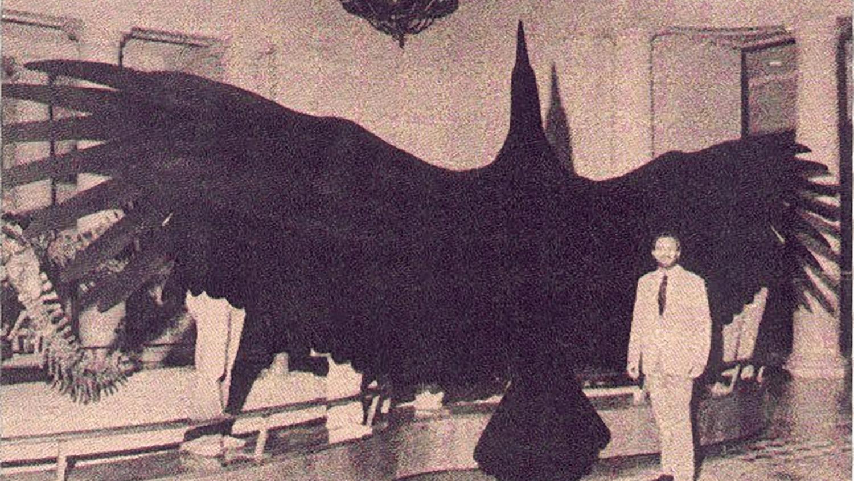 Giant-thunderbird-56c0d4de5f9b5829f86738ca cryptidz fandom.png