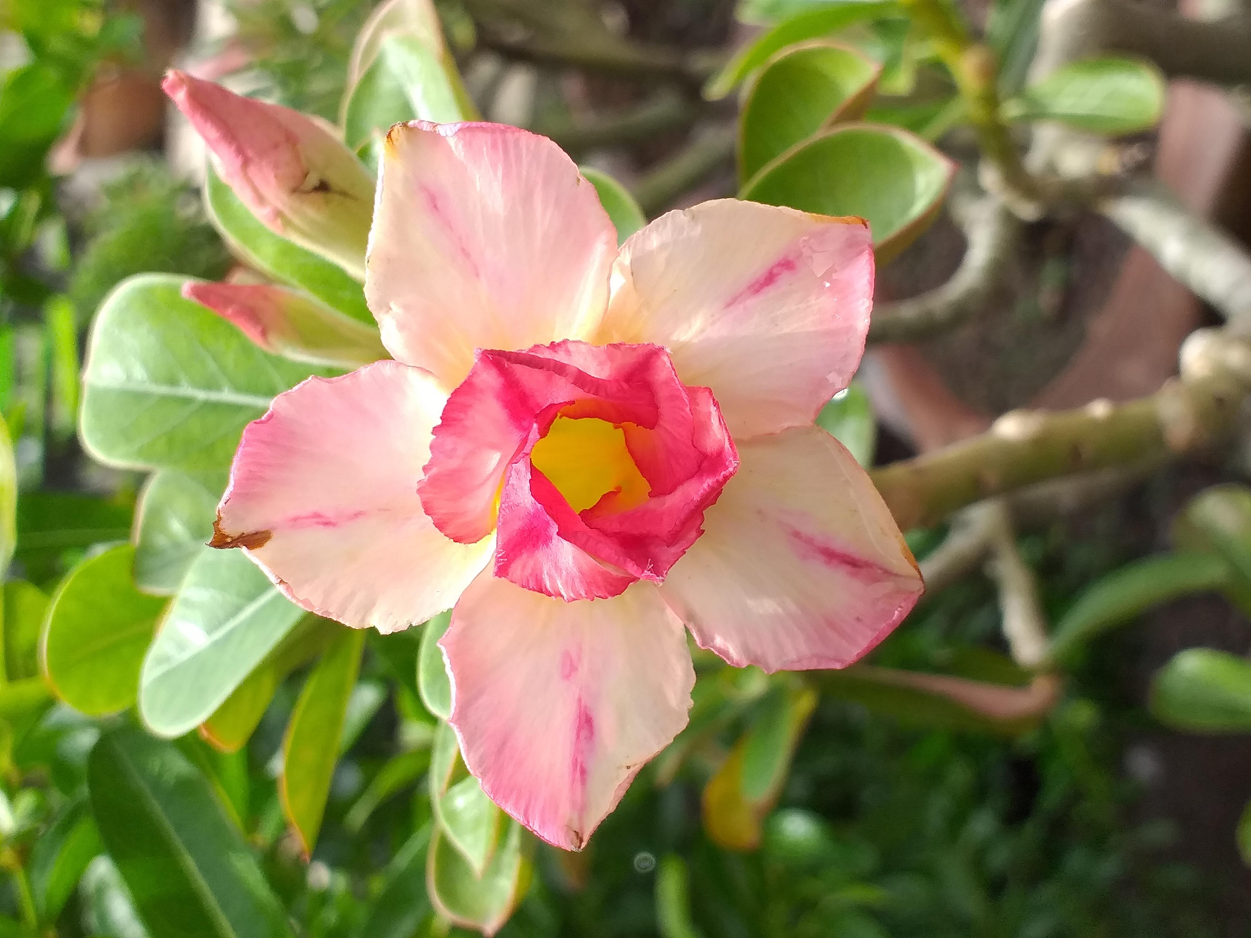 flower38.jpg