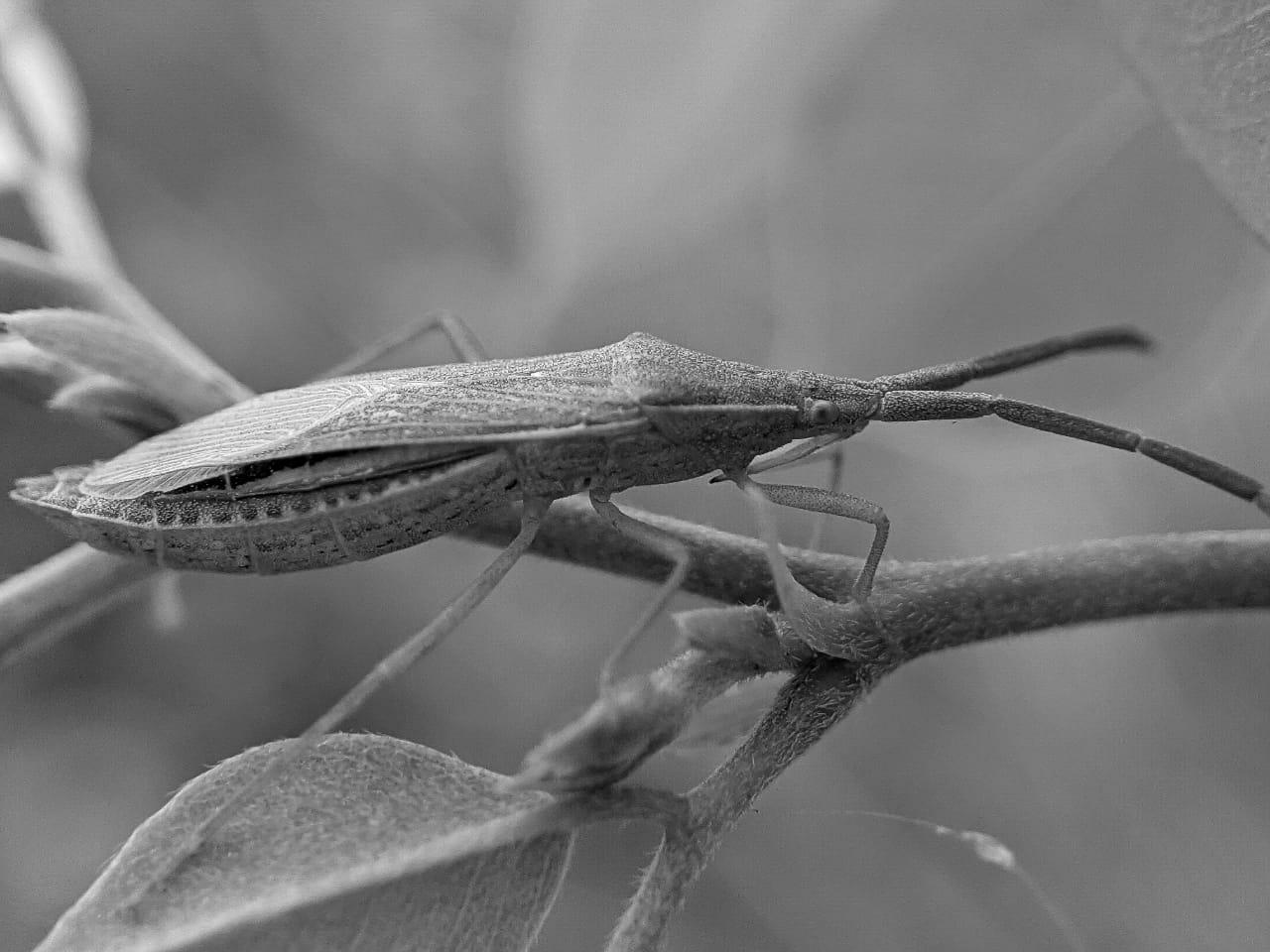bug (2).jpeg