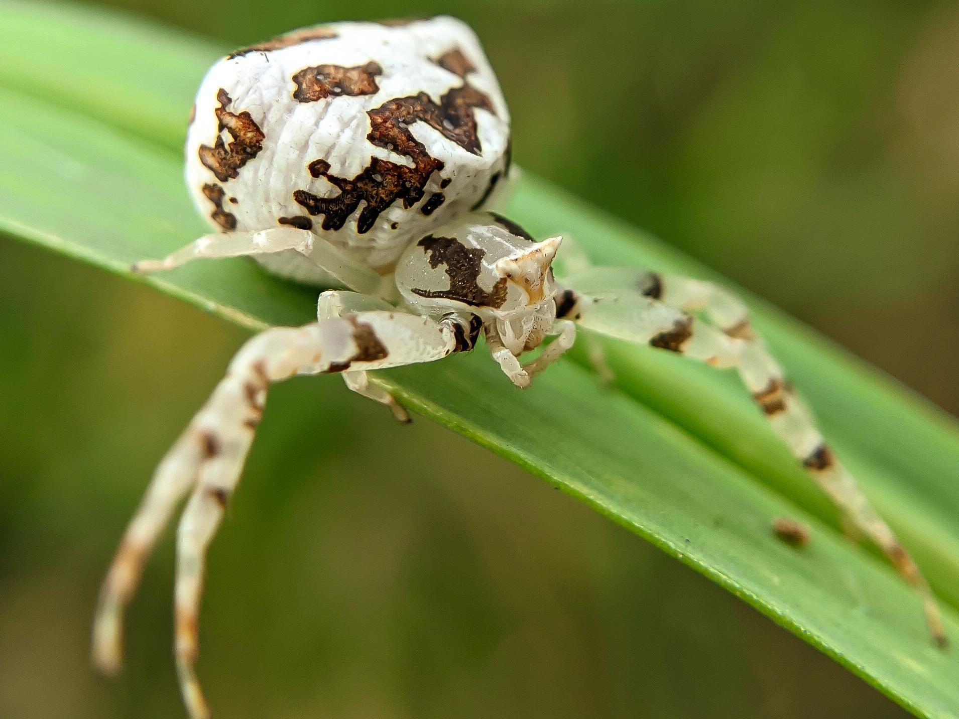 spider (9).jpg