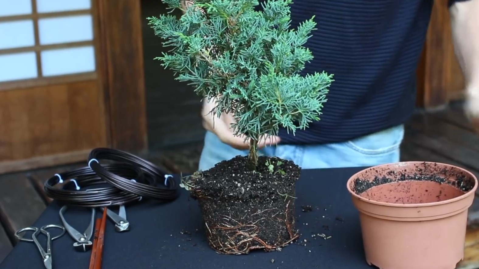 07.-Como-crear-un-bonsai-de-enebro-limpieza.jpg