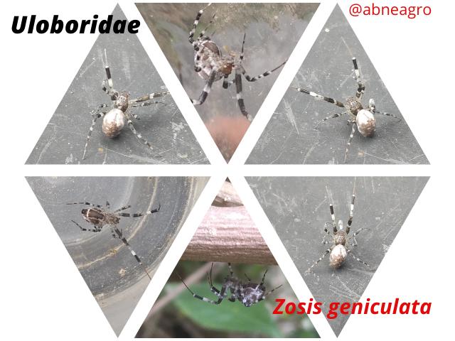 Arachnida(9).png