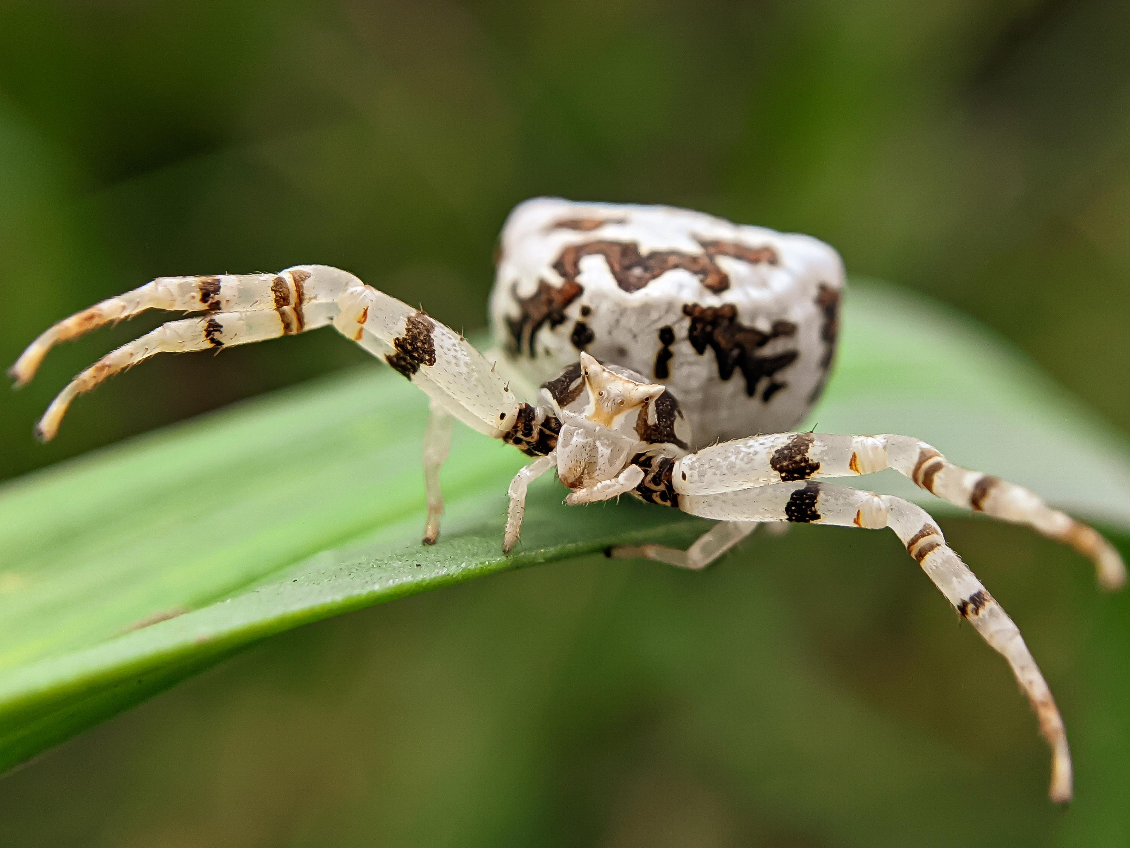 spider (8).jpg