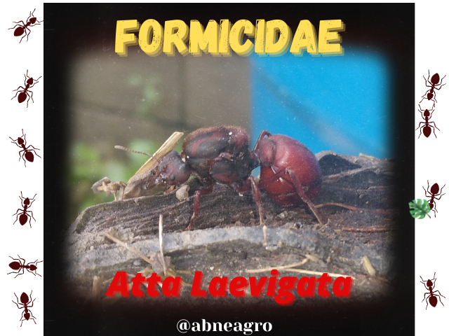 Formicidae(2).png