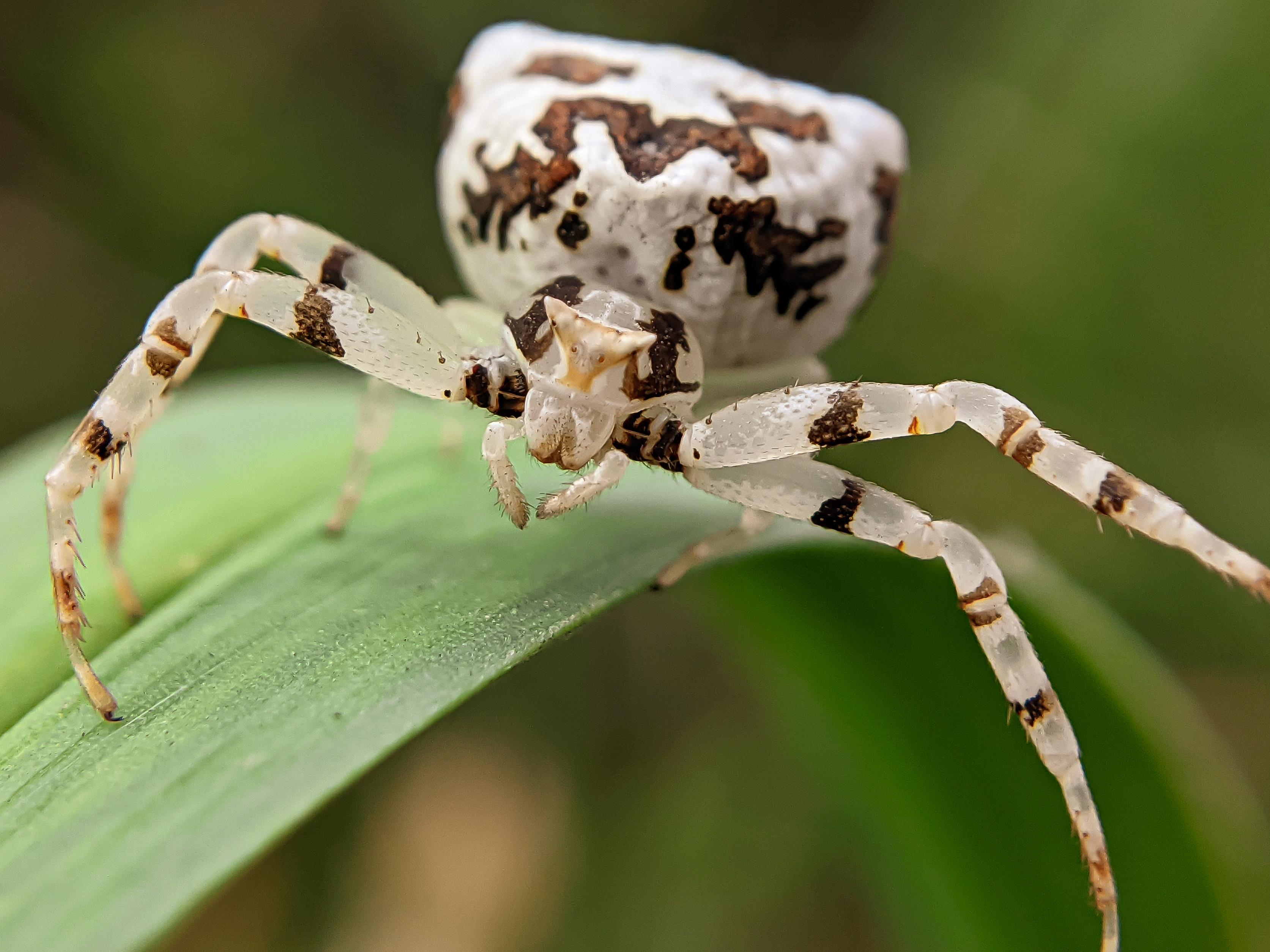 spider (3).jpg