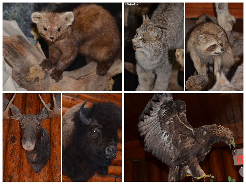 buffalo nations museum (1).jpg