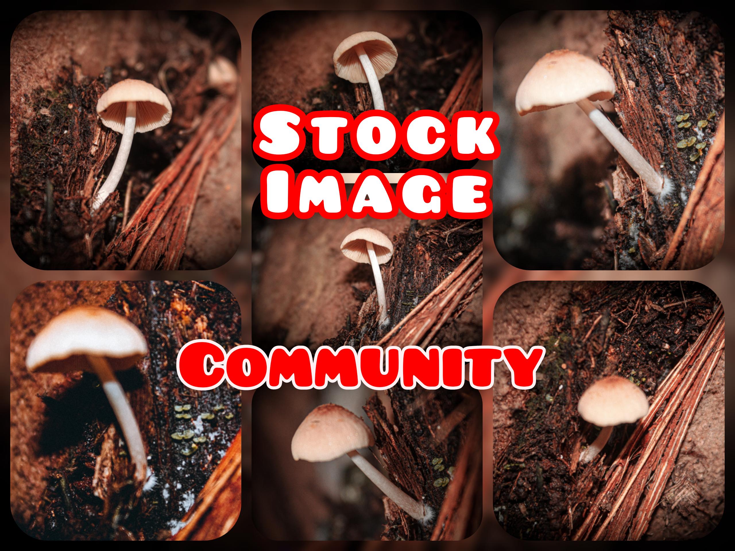 inCollage_20210729_111422701.jpg