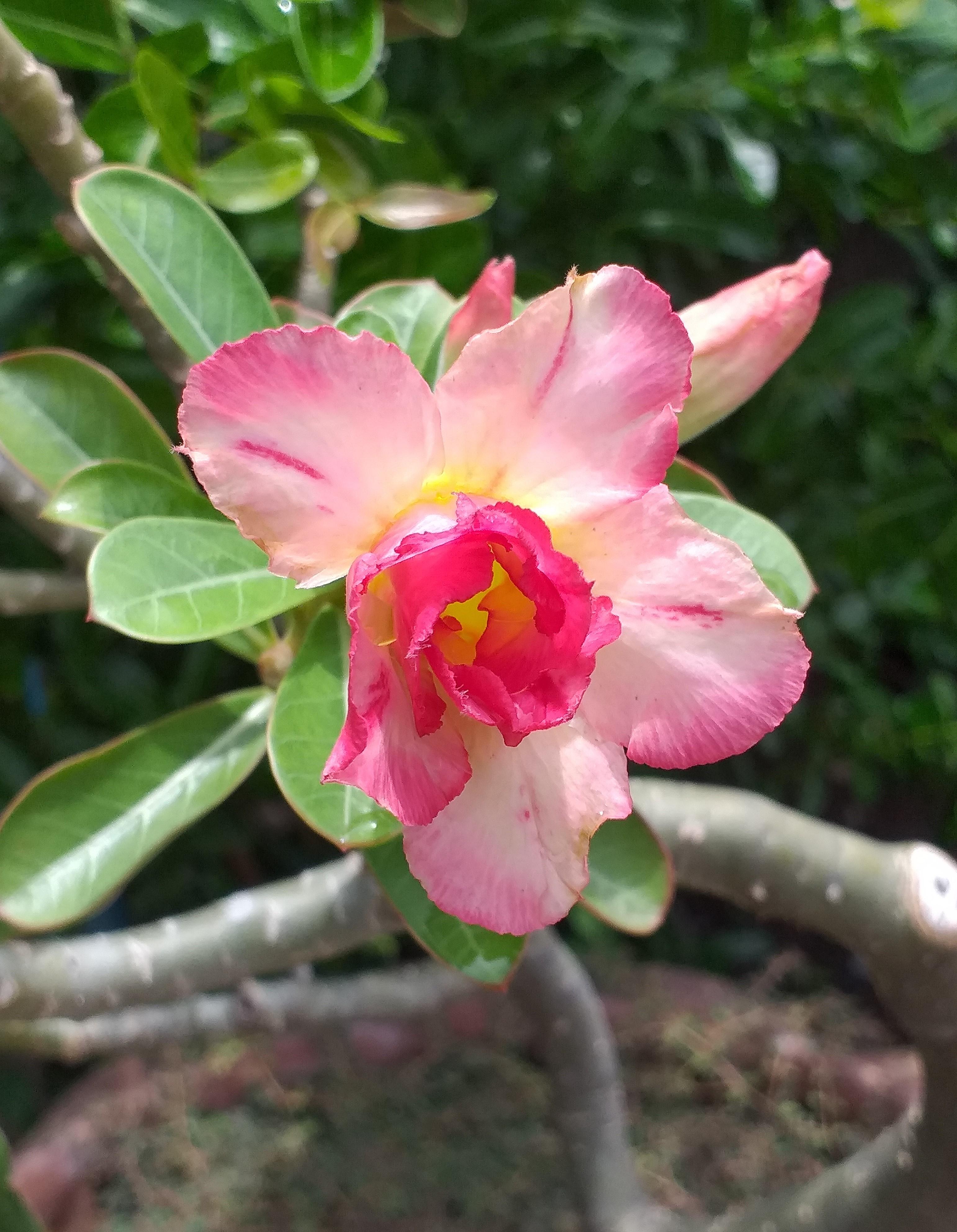 flower40.jpg