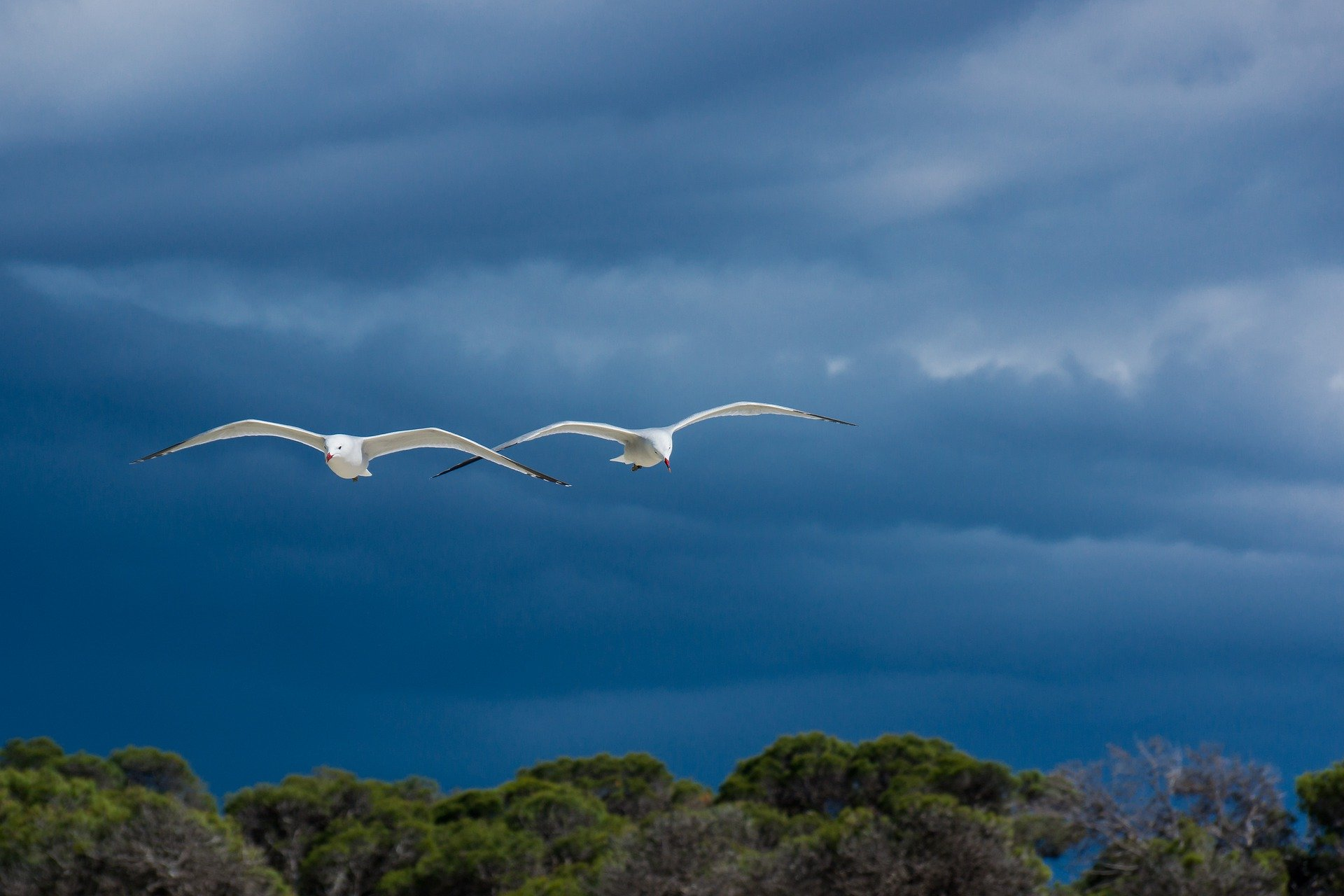 seagulls-6309501_1920.jpg