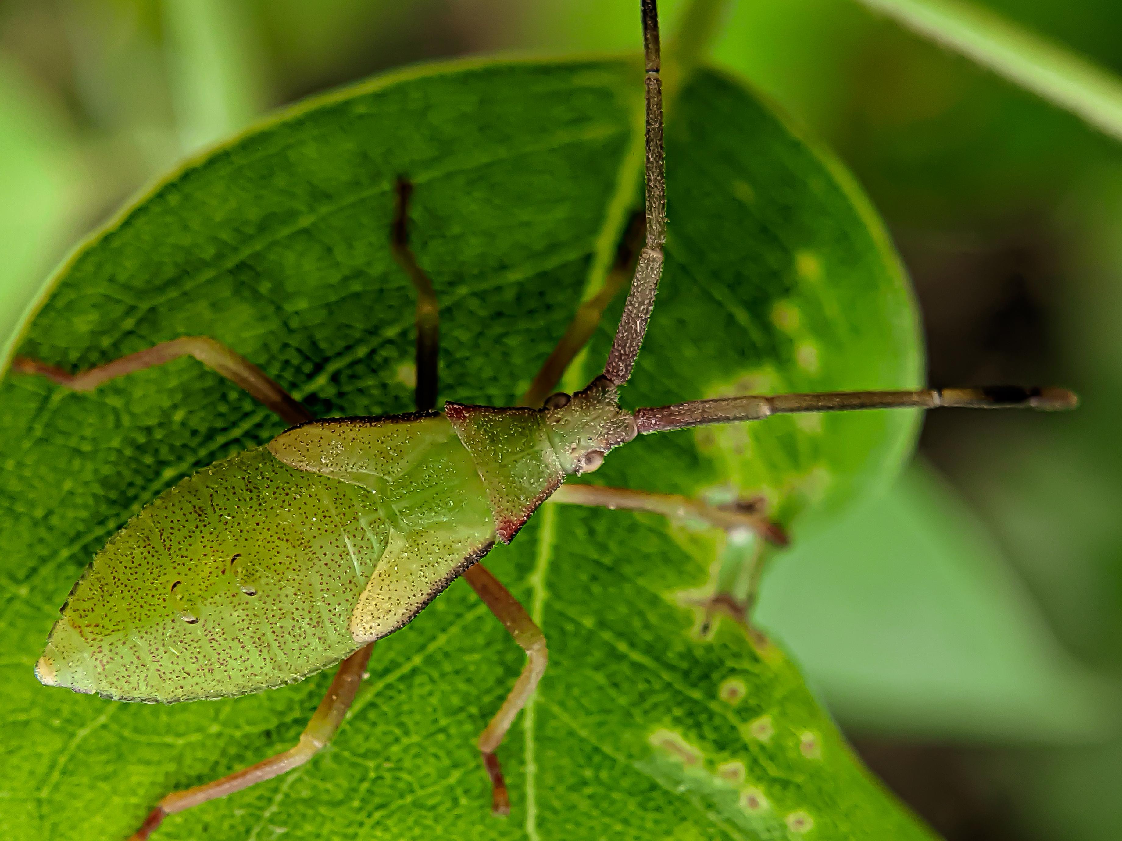 bug (8).jpg